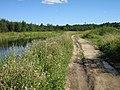 Дорога вдоль реки Ижоры - panoramio.jpg