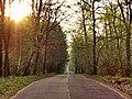 Дорога к Рыбачьему посёлку через Нагорную дубраву.jpg