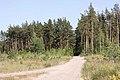 Дорога к озеру (2010.07.07) - panoramio.jpg