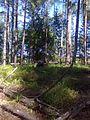 За грибами - panoramio.jpg
