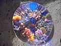 Коралловые рифы, преломленные в изогнутой линзе.jpg