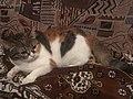 Кошка Сима.jpg