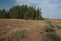 Лесопосадка - panoramio (4).jpg