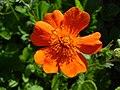 Літо в ботанічному саду ТНУ імені В. І. Вернадського.jpg