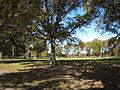 Марин Парк осенью.jpg