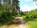 Между с-т Русь и Селиванихой 2013 - panoramio.jpg