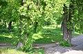 Наводницкий парк в Киеве. Фото 71.jpg