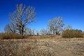 Осенний лес на берегу Илека - panoramio (1).jpg