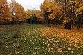 Осень в Винновской роще.jpg