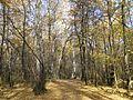 """Осень в парке """"Олимпик"""" - panoramio.jpg"""