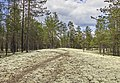 Печоро-Илычский заповедник. Растет ягель.MG 8522.jpg
