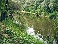 Річка Псел біля водокачки в заказнику Хорішки.jpg