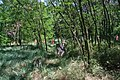 Старовинне козацьке кладовище в с. Трахтемирів (4).jpg