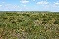 Степь в конце мая - panoramio (1).jpg