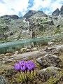 Страшното езеро - panoramio (3).jpg