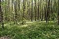 Теліженецький ліс DSC 0049.jpg