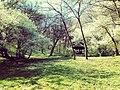 Шума храста у близини Хајдучке чесме.jpg