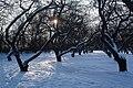Яблоневый сад зимой - panoramio.jpg
