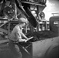 בית-זרע 1939 - העברת אספלט מוכן למשאית לצורך פיזור על התוואי - iוינטרש btm11427.jpeg