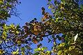 برگ زرد-پاییز-yellow leaves-falling leaves 27.jpg