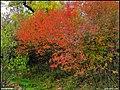 دیدنیهای پاییز مراغه - panoramio (13).jpg