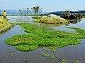 八煙水中央 Bayan old paddy field - panoramio.jpg