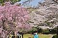 南大沢・柳沢の池公園 - panoramio.jpg