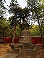 古松遮塔 - Ancient Pine Protecting the Pagoda - 2012.04 - panoramio.jpg