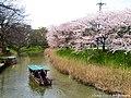 大聖寺流し舟からの桜見物(Daishoji in spring) 09 Apr, 2016 - panoramio.jpg