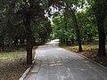 孔林 - Cemetery of Confucius - 2015.06 - panoramio (1).jpg