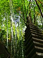 岩屋堂公園 (愛知県瀬戸市岩屋町) - panoramio (11).jpg