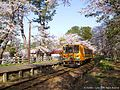 津軽鉄道と桜(Tsugaru Railway with Cherry blossoms) 26 Apr, 2015 - panoramio.jpg