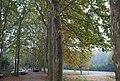 秋之树二 - panoramio.jpg