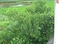 青山绿水 - panoramio.jpg