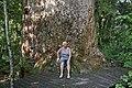 00 29 0518 Neuseeland - Kauri-Baum.jpg