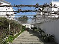 110 Casa Arenas, c. Marcel·lina Jacas 20 (Vilanova i la Geltrú), pèrgola.jpg