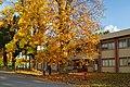 171103 Iwate University Morioka Iwate pref Japan09s3.jpg