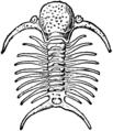 1911 Britannica-Arachnida-Deiphon Forbesii.png