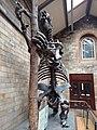 19 متحف التاريخ الطبيعي.jpg