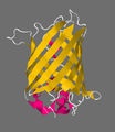 1RRX pdb structures.png
