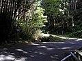2010-9-18 芋峠 - panoramio - ys1979 (1).jpg