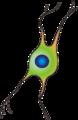 201102 oligodendrocyte.png
