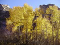 2012-10-17 507 Aspens in Lamoille Canyon.jpg