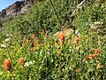 2014-07-25 17 33 33 Wildflowers along the trail in Hennen Canyon, Nevada.JPG