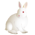 201408 rabbit.png
