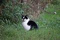 20141102- Black and White Cat by sebaso 06.jpg