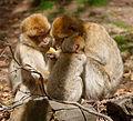2016-04-21 14-57-56 montagne-des-singes.jpg