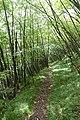 32036 Sedico, Province of Belluno, Italy - panoramio (2).jpg