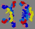 3D structure of secretory IgA2.png