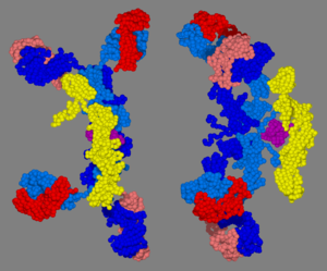 Immunoglobulin A - Image: 3D structure of secretory Ig A2